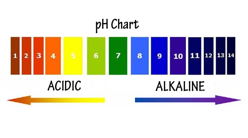 How Your pH Determines Your Overall State of Health