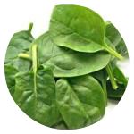Circle Spinach-150x150